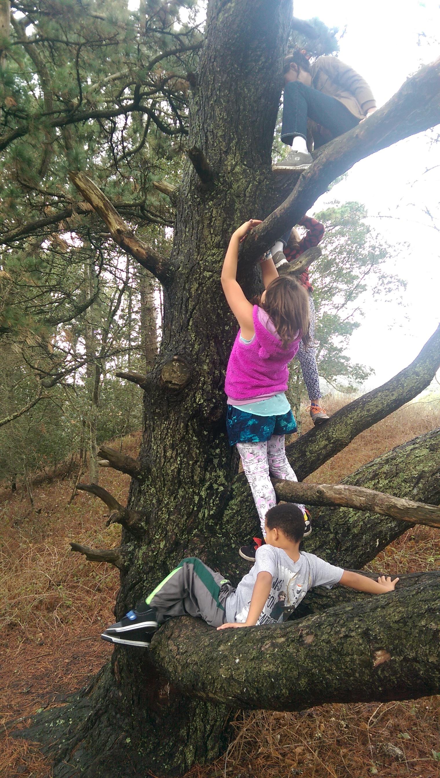 tree-climbin